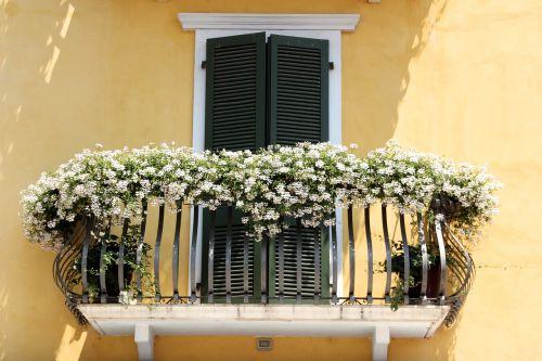 balcony plant balcony plants