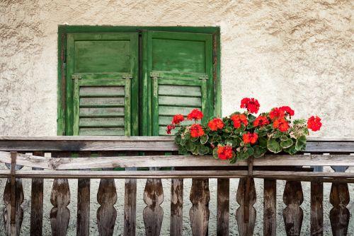 balcony flowers balcony plant