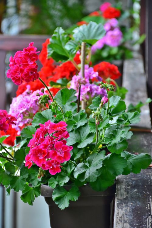 balcony flower box flowers summer