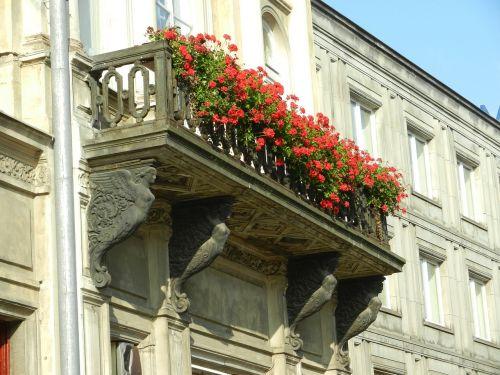 balcony flowers flowered