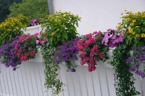 balcony plants flowering plant summer