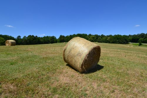 bale of hay fever boots hayfever