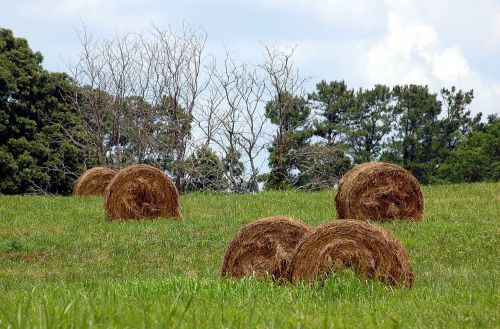 bales of hay rural agriculture