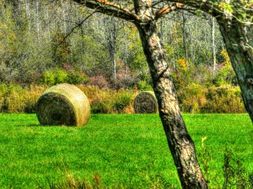 Bales Of Hay In Autumn
