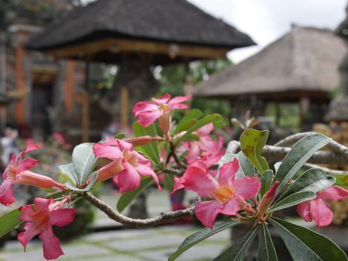 bali asia indonesia