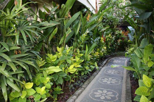bali indonesia tropical