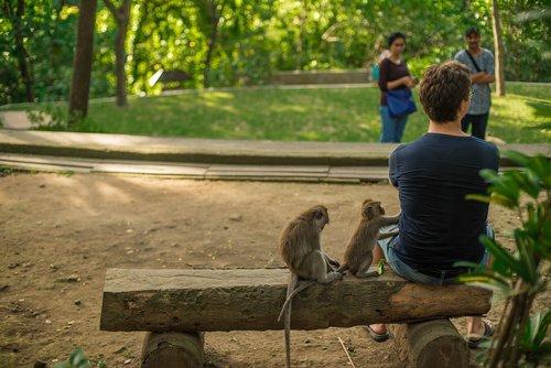 bali  indonesia  monkey