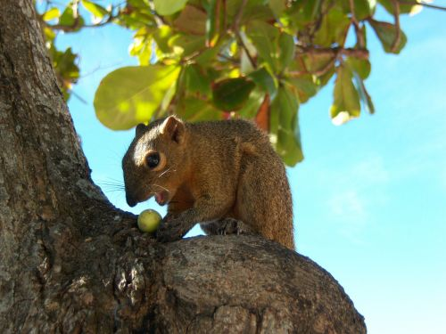 bali squirrel trustful animal