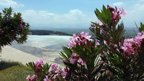 balsam flower nature