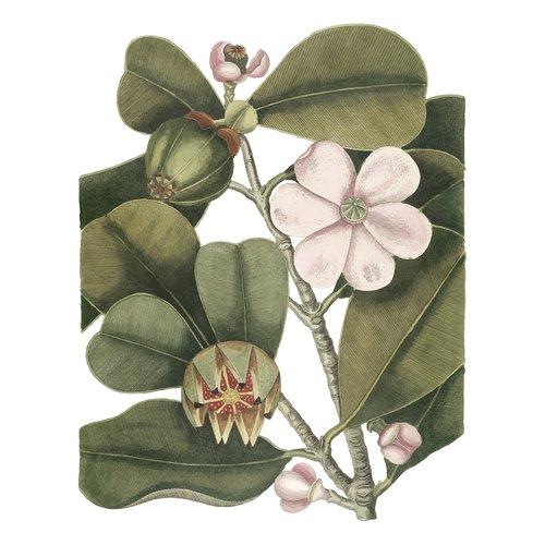 balsam tree  flora  plant