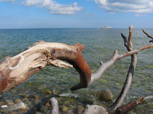 baltic sea rügen dead wood