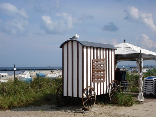baltic sea damp beach life