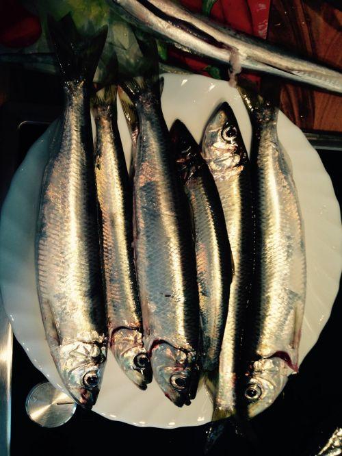 baltic sea herring fish