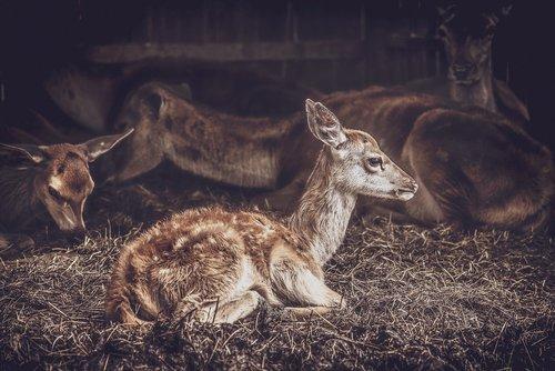 bambi  animal  cute