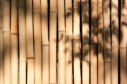 bamboo giant bamboo bamboo wall