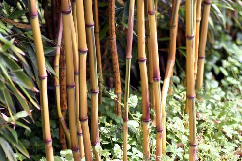 bamboo nature wood