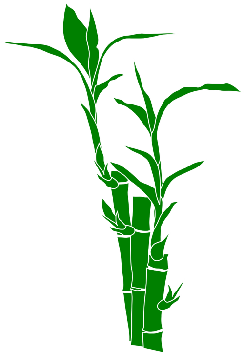 bamboo,plant,nature,leaves,wood,gramineous plant,graminaceous plant,free vector graphics