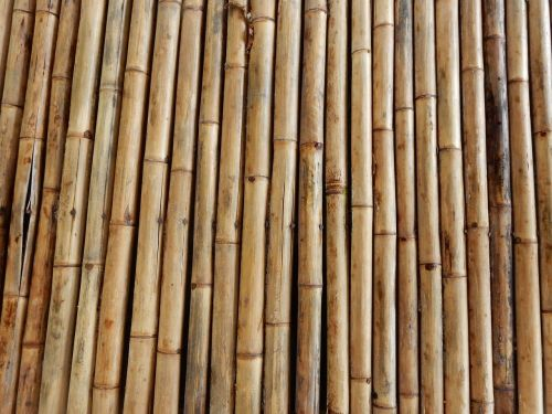 bamboo structure texture