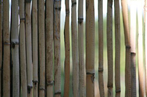 bamboo yellow bamboo halme