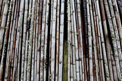 bamboo bundle design