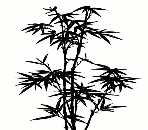 bamboo plants black