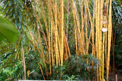 bamboo bali nature