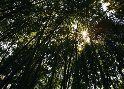 bamboo the scenery shade
