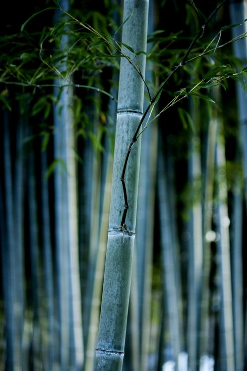 bamboo nature forest