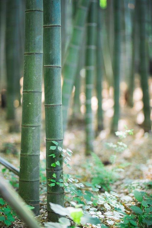 bamboo  landscape  tabitha