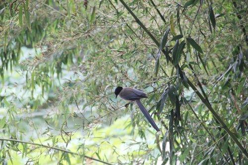 bamboo  bird  perched