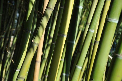 bamboo ticino brissago islands