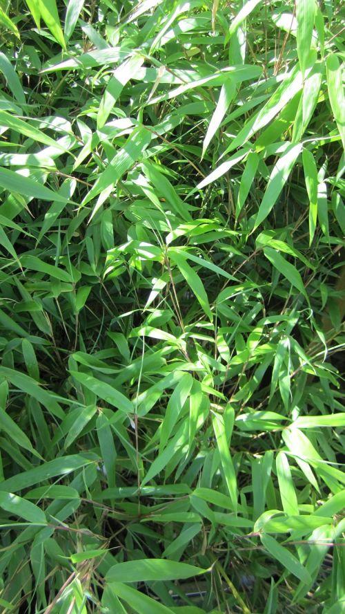 bamboo zen freshness