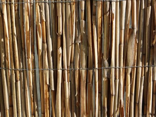 bamboo texture pattern