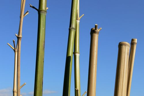 bamboo sky cannes