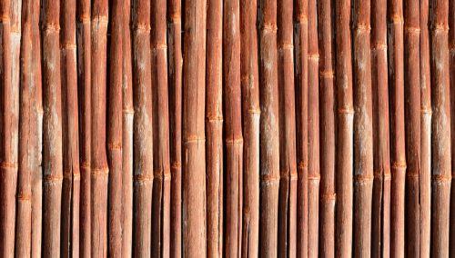 bamboo wood garden