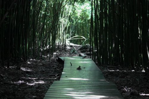 bamboo forest bamboo forest