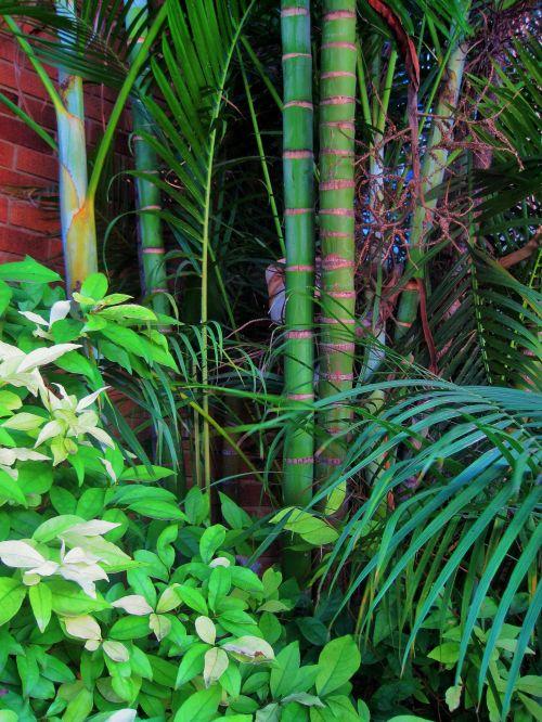 Bamboo And Greenery