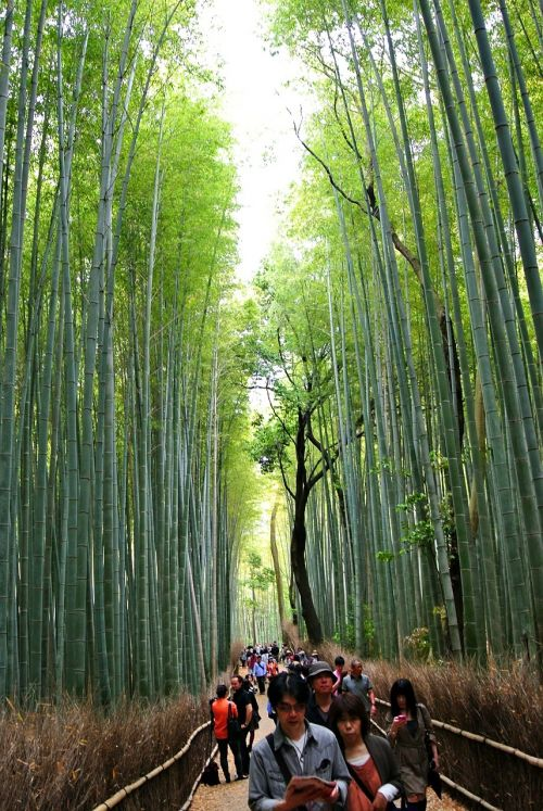 bamboo forest sagano forest