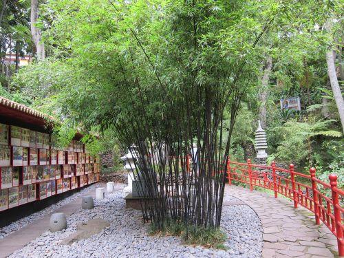 bambuko sodas,bambukas,rytietiškas,japoniškas sodas,japanese,zen,žalias,natūralus,gamta,sodas