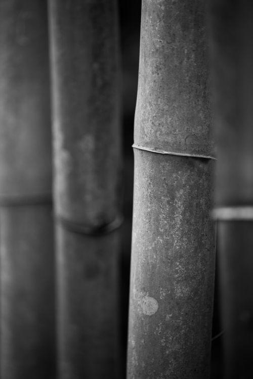 Bamboo Sticks