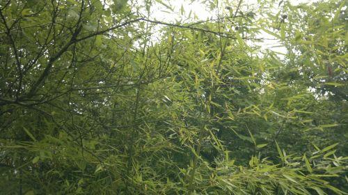 Bamboo And Vegetation