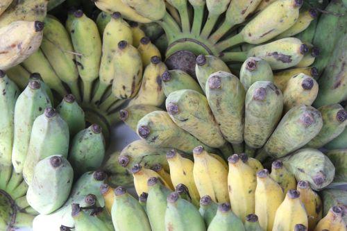 banana cultivated banana asian banana