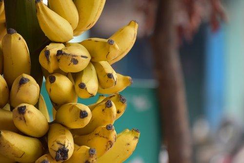 banana  fruit  india