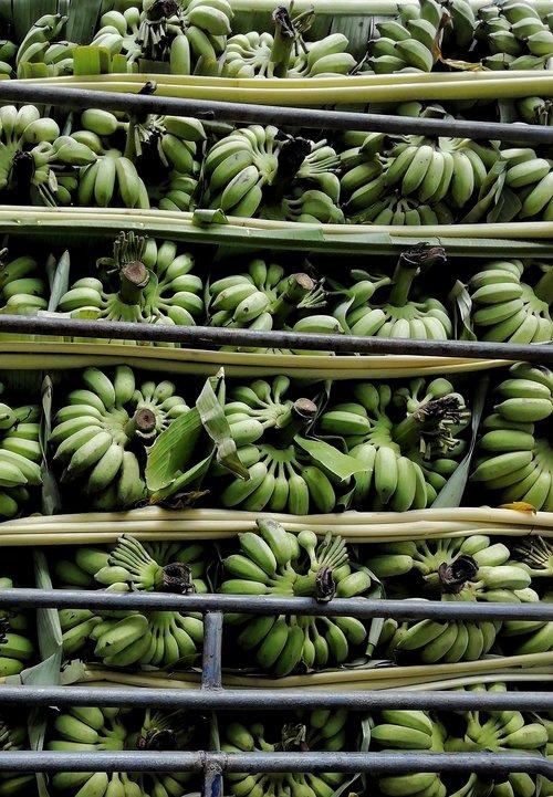 banana  fruit  array