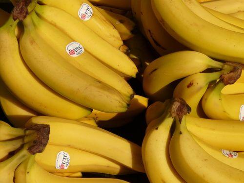 bananas,vaisiai,sveikas,geltona,atogrąžų,maistas,bananinis krūmas,krūmas,bananai,vaisių