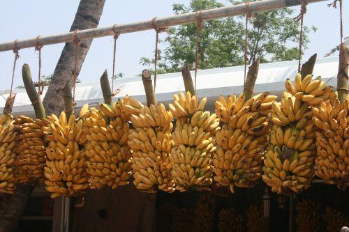 banana bunch indian bananas banana