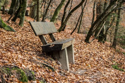 bank forest autumn