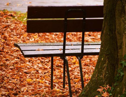 bank autumn leaves