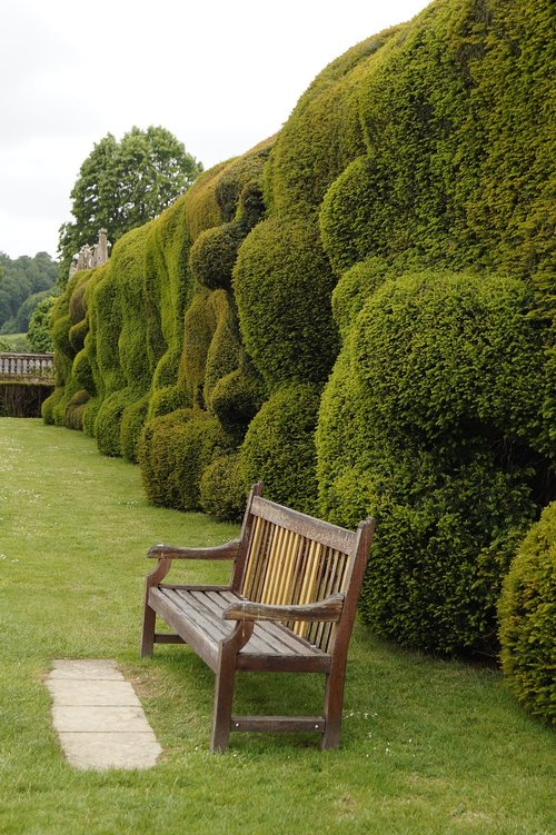 bank  hedge  thuja
