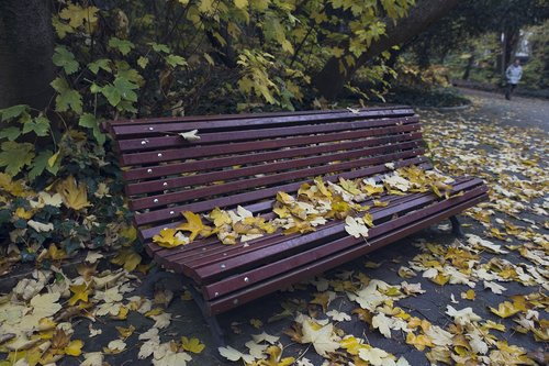 bank  leaves  autumn